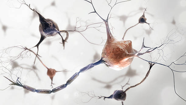 neurons e sistema nervoso - foto stock
