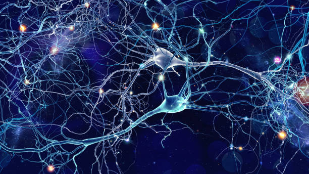 nervceller celler koncept - brain magnifying bildbanksfoton och bilder