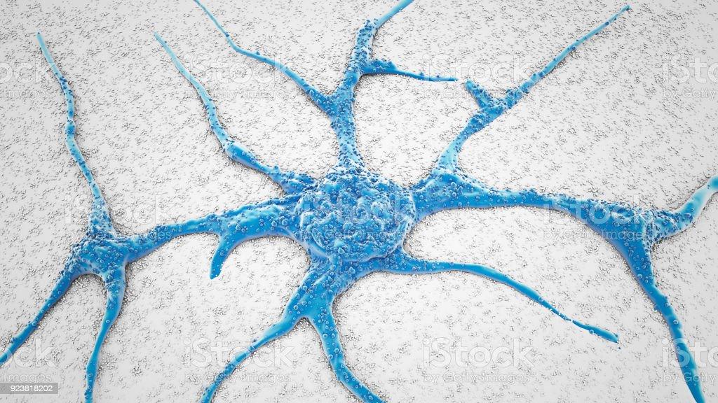 SEM PC12 neurons cells stock photo