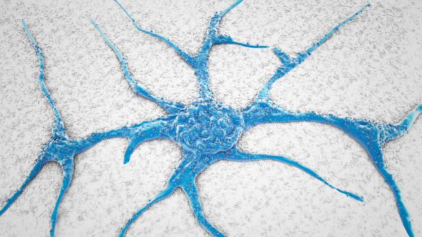 SEM PC12 neurons cells stock photo