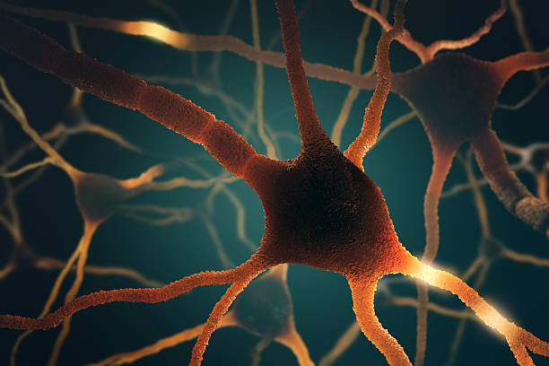 Neurons Concept Image concept of neurons interconnected in a complex brain network. axon terminal stock pictures, royalty-free photos & images