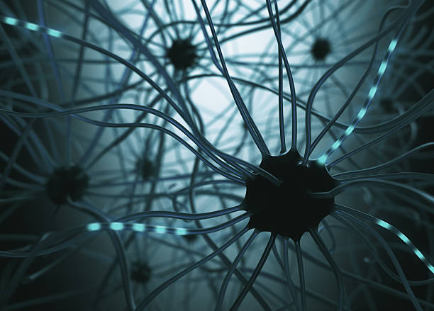 Neurons Concept Image concept of neurons interconnected in a complex brain network. autoreceptor stock pictures, royalty-free photos & images