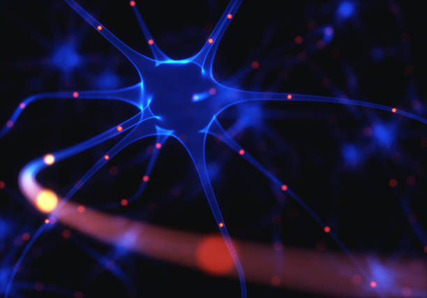 Neurons Electrical Pulses 3D illustration of Interconnected neurons with electrical pulses. motor neuron stock pictures, royalty-free photos & images