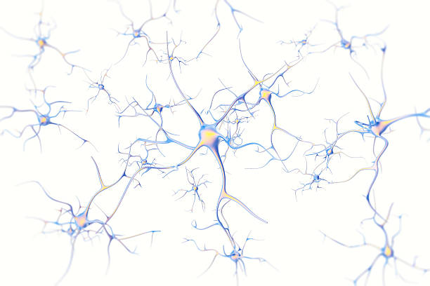 neurons in the brain on white background with focus effect - nerve cell stock photos and pictures