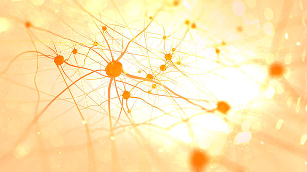 Neurons in the brain Neurons in the brain on light background synapse stock pictures, royalty-free photos & images