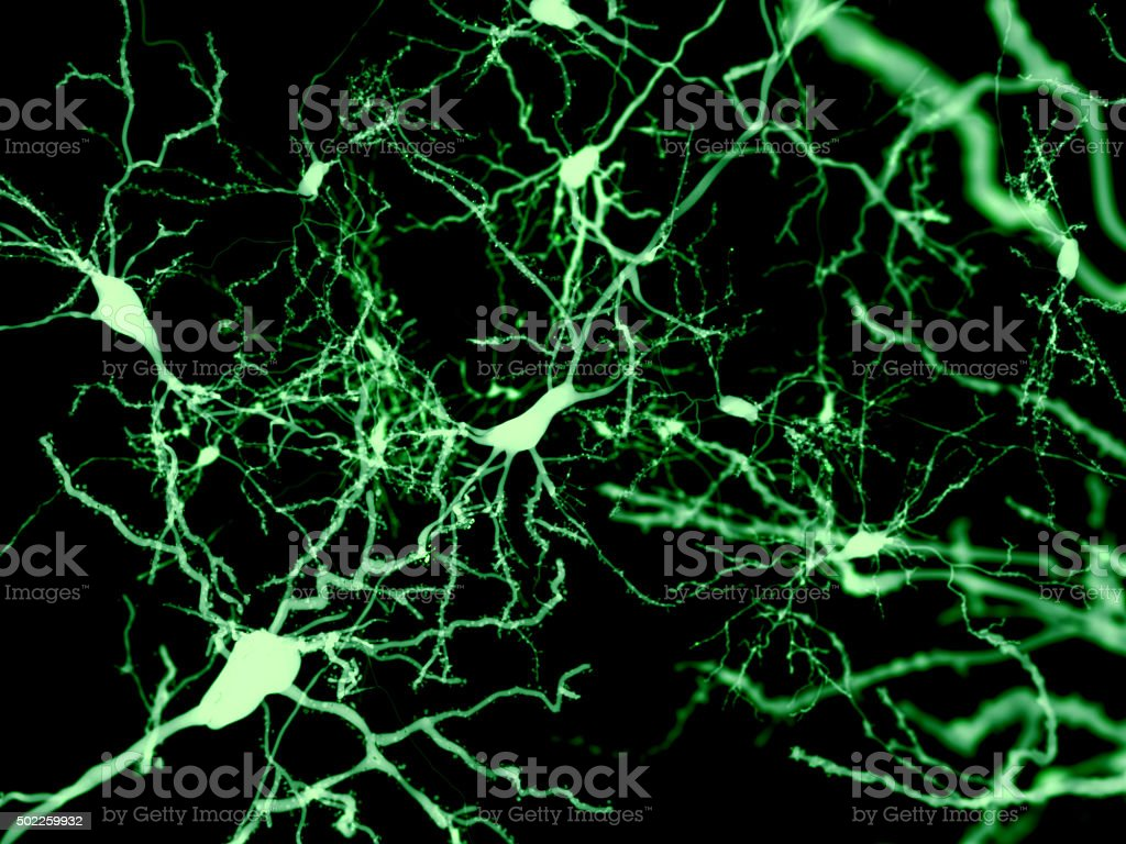 Neurons, marked by fluorescence stock photo