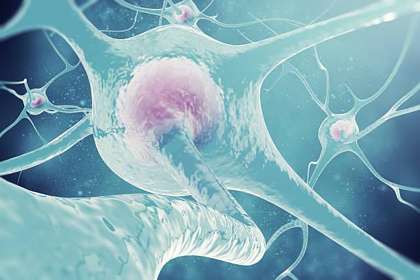 neurons of the nervous system. 3d illustration nerve cells - axon stock-fotos und bilder