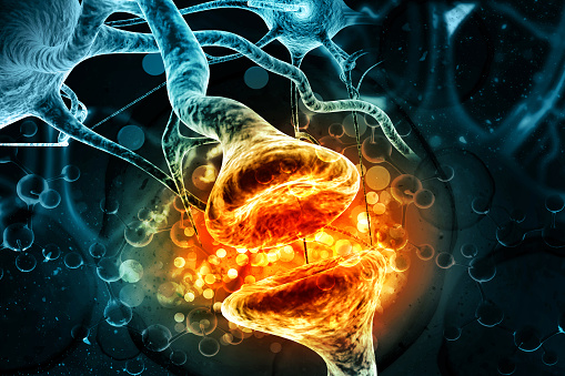 istock Neurons on scientific background 1008390214