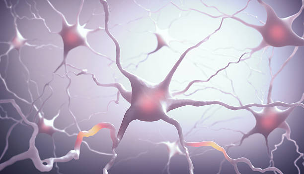 Neurones Inside the brain. Concept of neurons and nervous system. axon terminal stock pictures, royalty-free photos & images