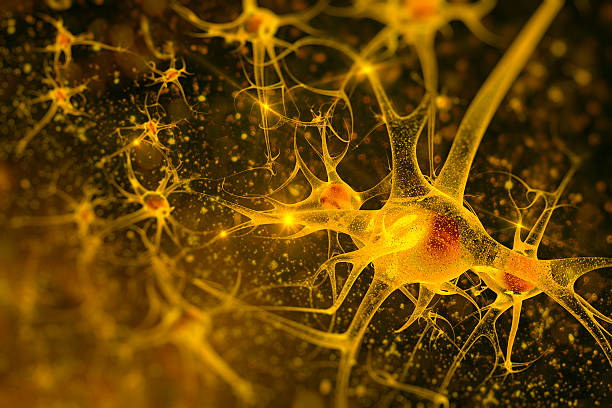 neurons digital illustration neurons neurons stock pictures, royalty-free photos & images