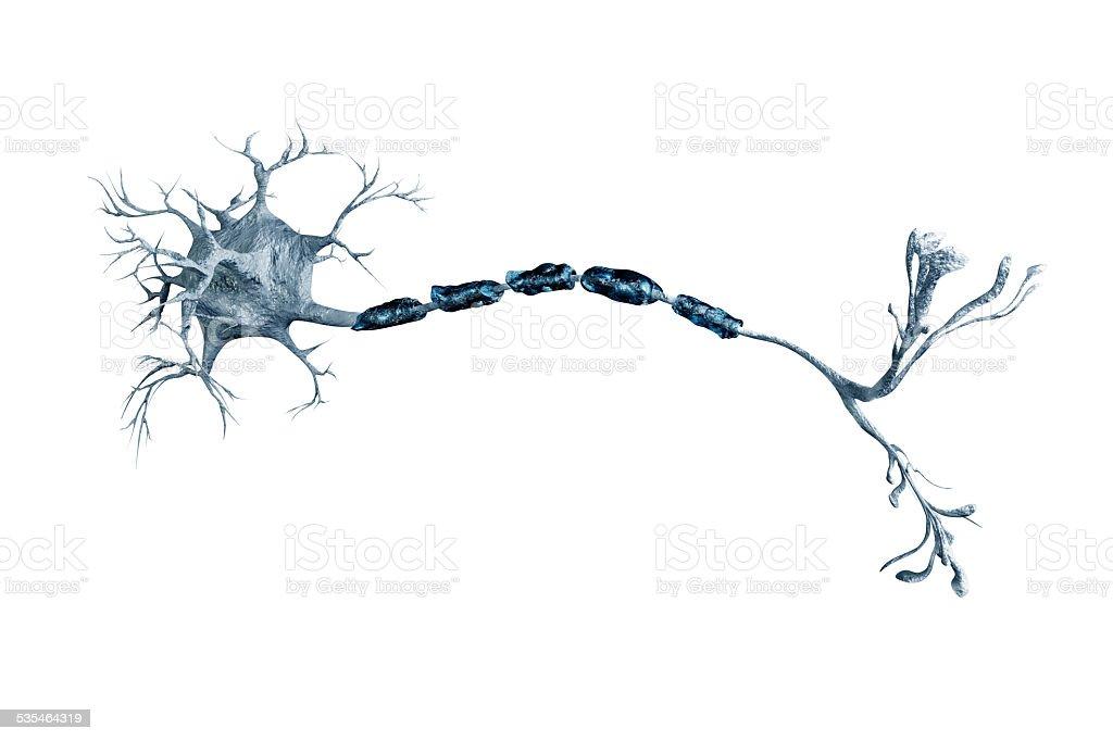 neurons digital illustration neurons 2015 Stock Photo