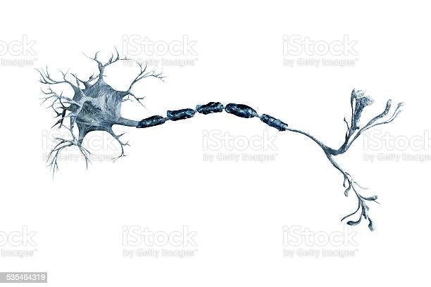Neurons Stock Photo - Download Image Now