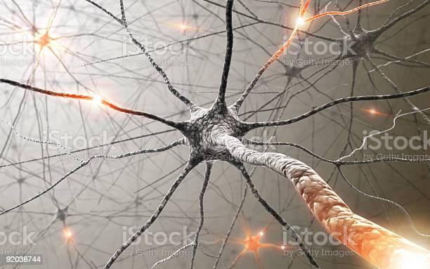 Neurons picture id92036744?b=1&k=6&m=92036744&s=612x612&h=bxdg5zbsicabbwoqltcnfeymirtzfsg49d6ybuxf ga=