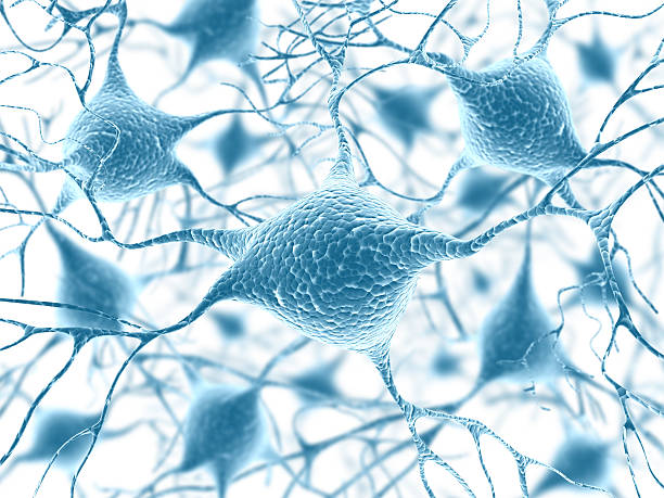 Neurons  axon terminal stock pictures, royalty-free photos & images