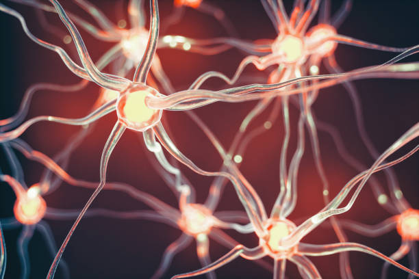 Neurons Connected nerve cells scientific background. synapse stock pictures, royalty-free photos & images
