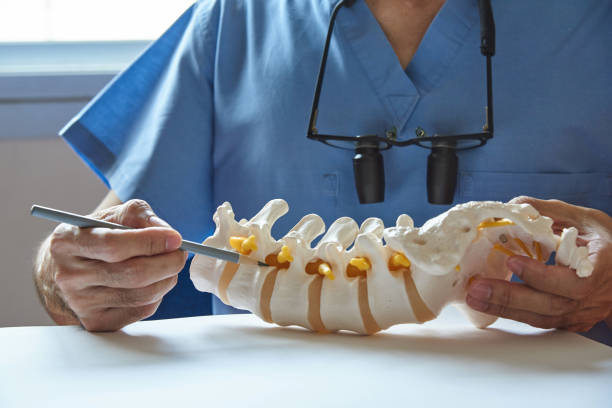 a neurosurgeon pointing at lumbar vertebra model - chiropractic care stock photos and pictures