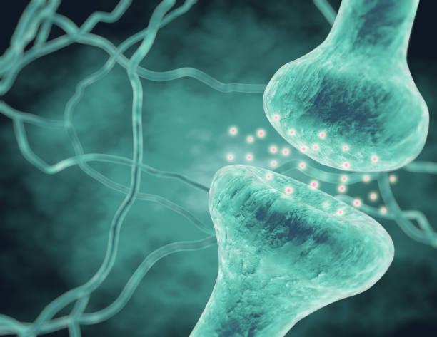 Neurotransmitters, neurons transmitting information. Neurotransmitters, neurons transmitting information 3d rendering. neurotransmitter stock pictures, royalty-free photos & images