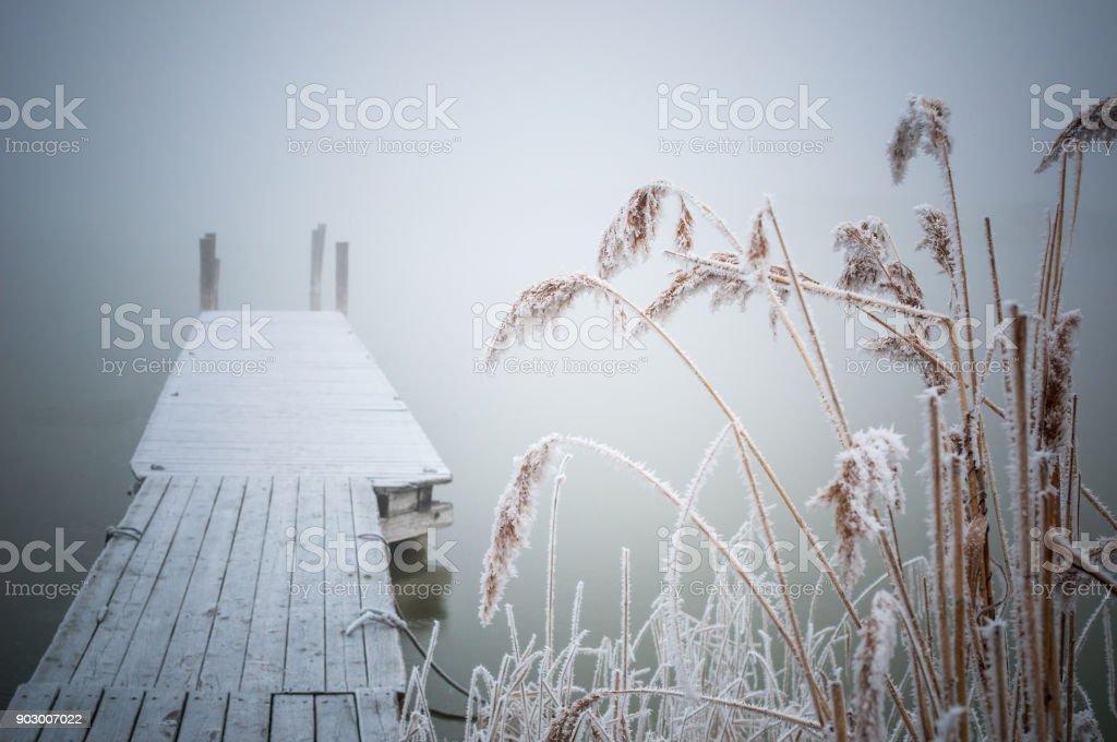 Neusiedlersee Im Nebel Mit Steg Und Schilf – Foto