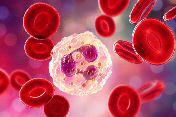 Neutrophil, a white blood cell stock photo