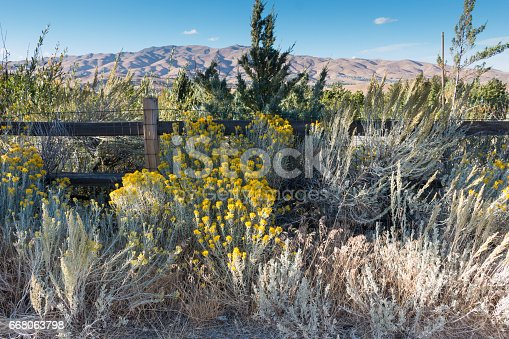 nevada desert plants with fence stock photo more pictures of