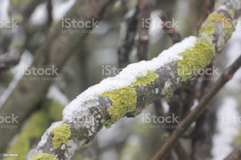 neve su ramo royalty-free stock photo