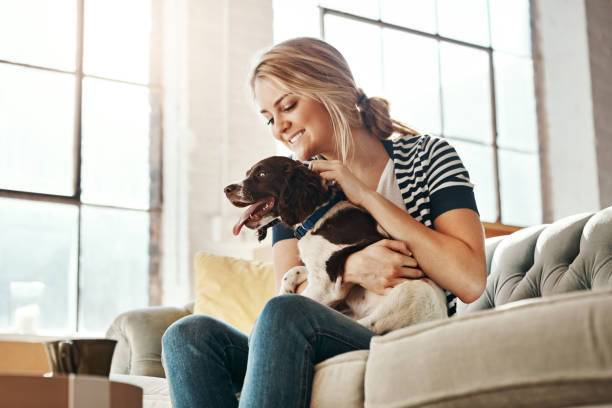 Never mind diamonds, dogs are a girl's best friend stock photo