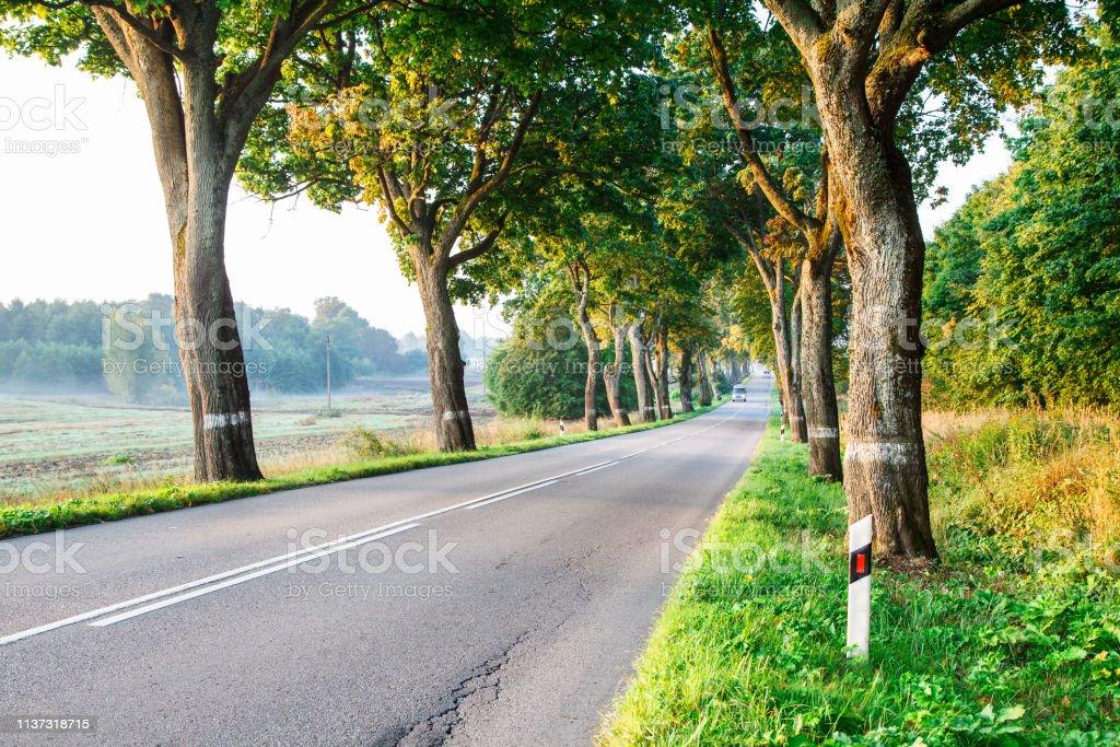 new asphalt road in the forest on summer foggy sunrise