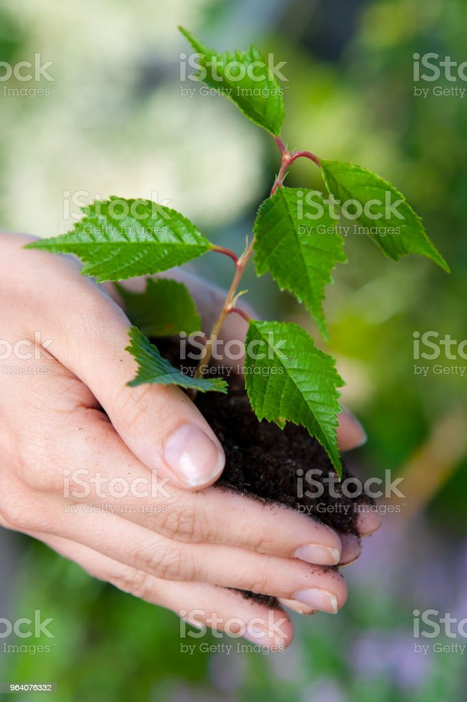 New baby plant - Royalty-free 20-24 Years Stock Photo