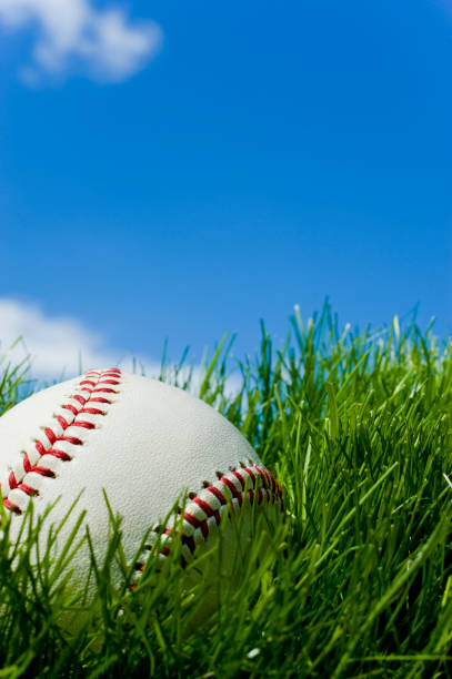 new baseball sitting in green grass - spring training stock photos and pictures