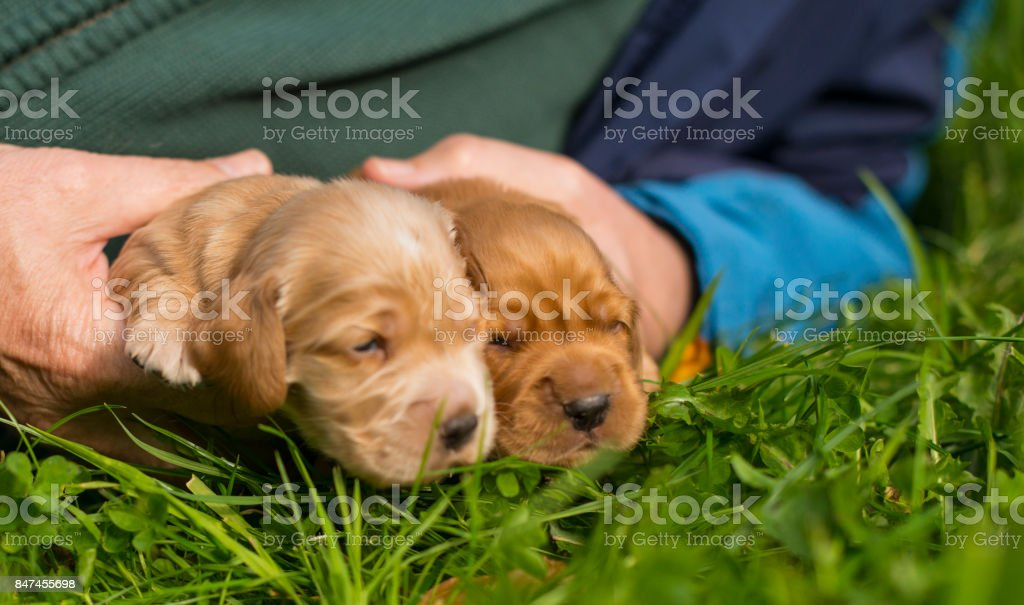 New born baby puppies royalty-free stock photo