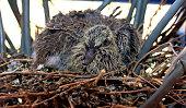 new born bird in the nest