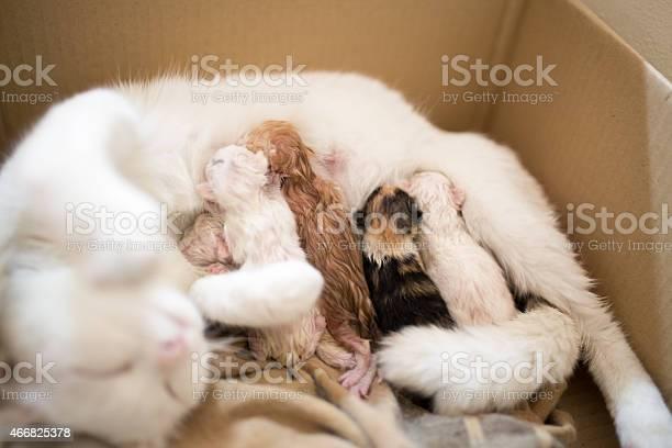 New born cat picture id466825378?b=1&k=6&m=466825378&s=612x612&h=pnfejbhuf08jbmrxwadwp5qaa7udl fqyy7lhuqvbgy=