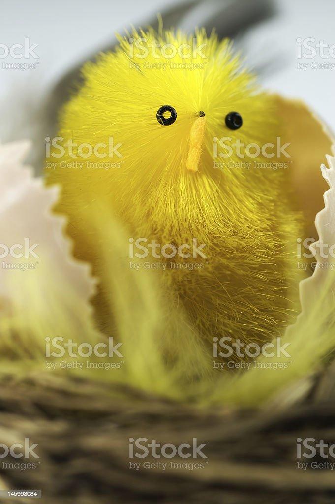 New born chick royalty-free stock photo