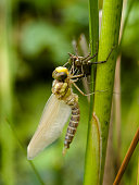 Birth of a Dragonfly.