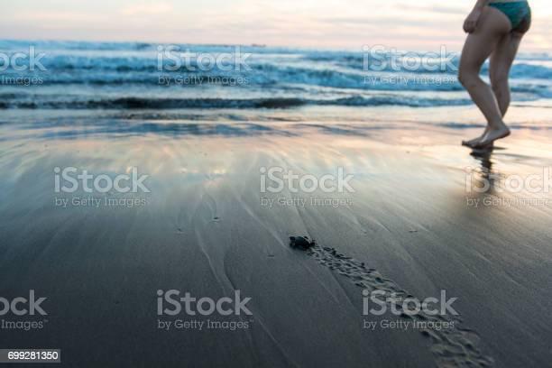 New born sea turtle picture id699281350?b=1&k=6&m=699281350&s=612x612&h=0xszdglqzof6rqf0c2ot7xqcg00nwstd5vops6xqujm=