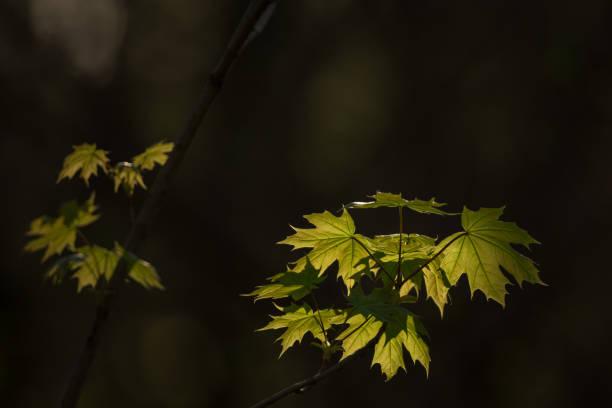 Nowe gałęzie w świetle lasu – zdjęcie