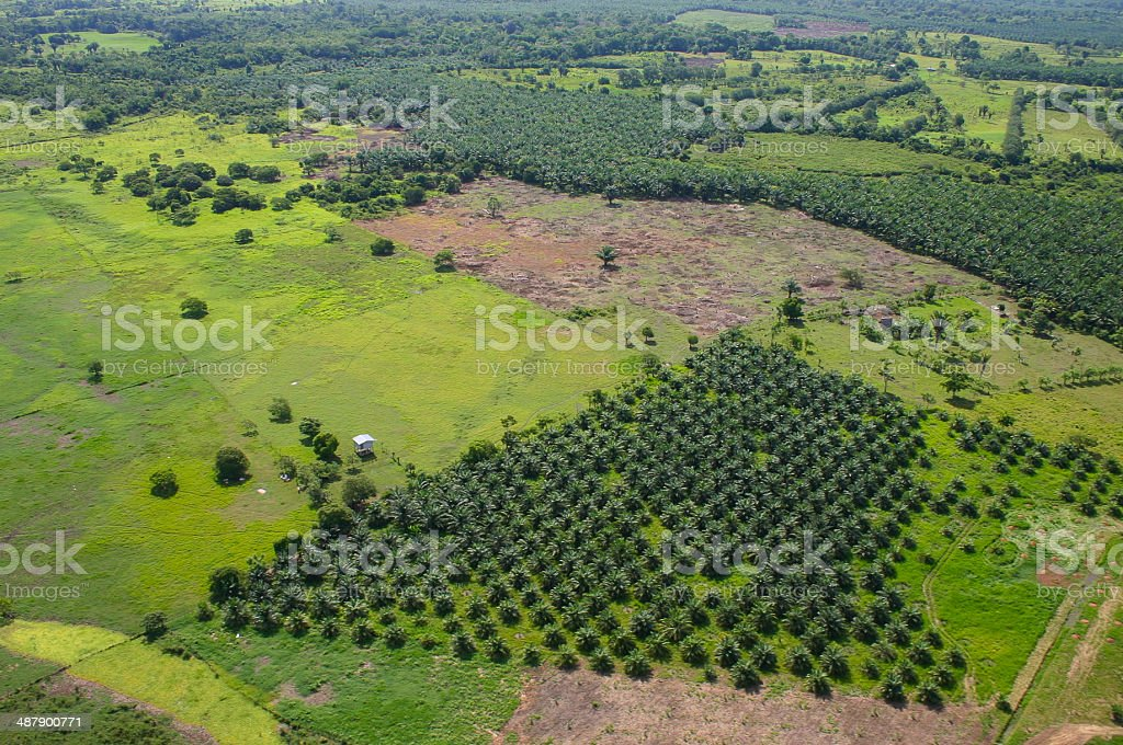 New Citrus Orchard and Palm Oil Plantations Honduras stock photo
