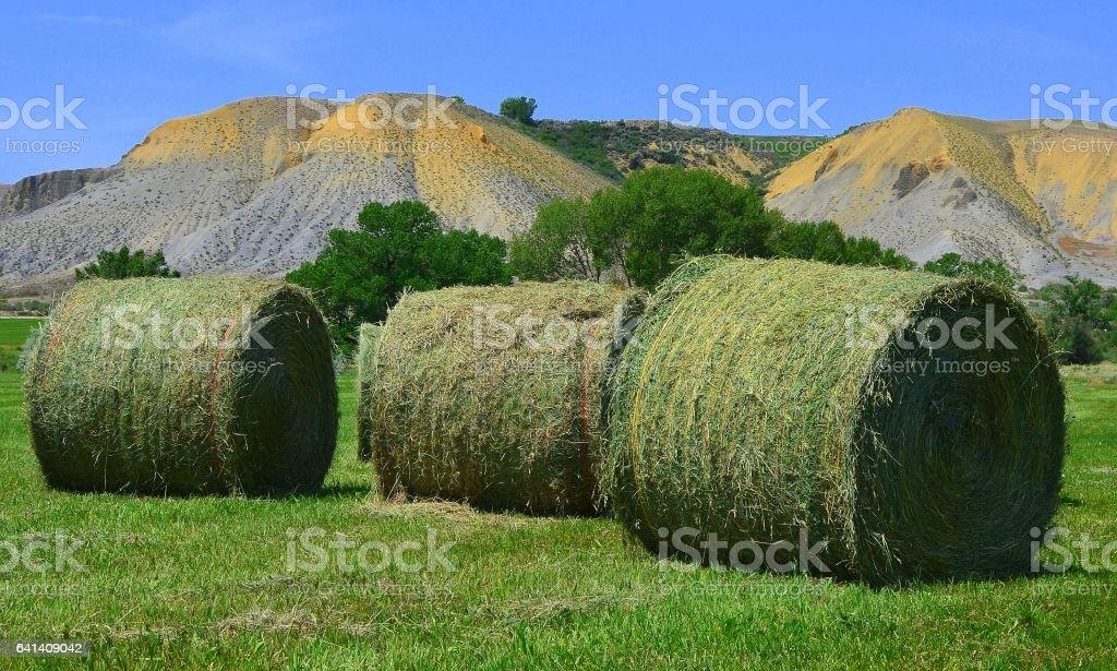 3 new cut hay bales stock photo