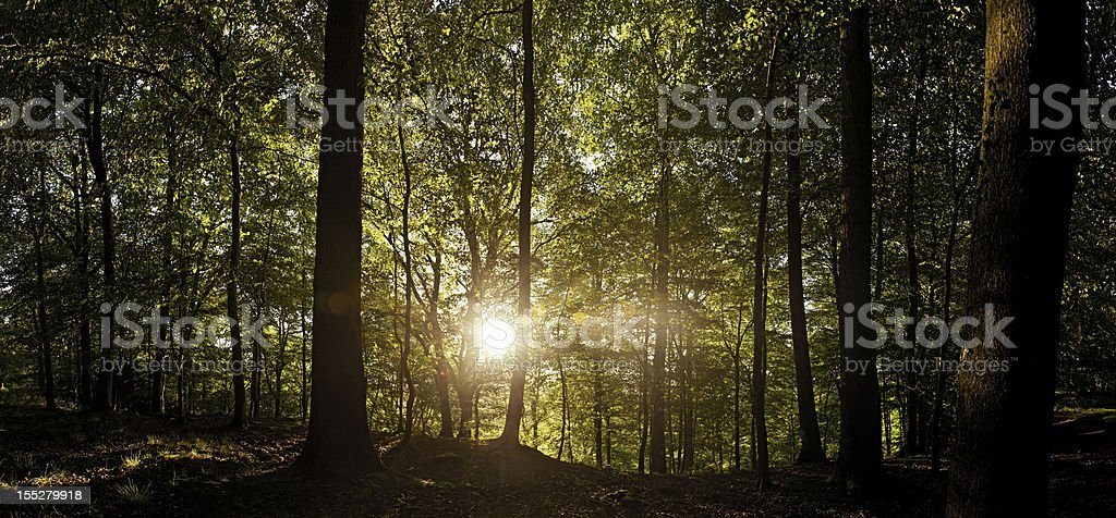 New day dawning in fairytale forest glade royalty-free stock photo