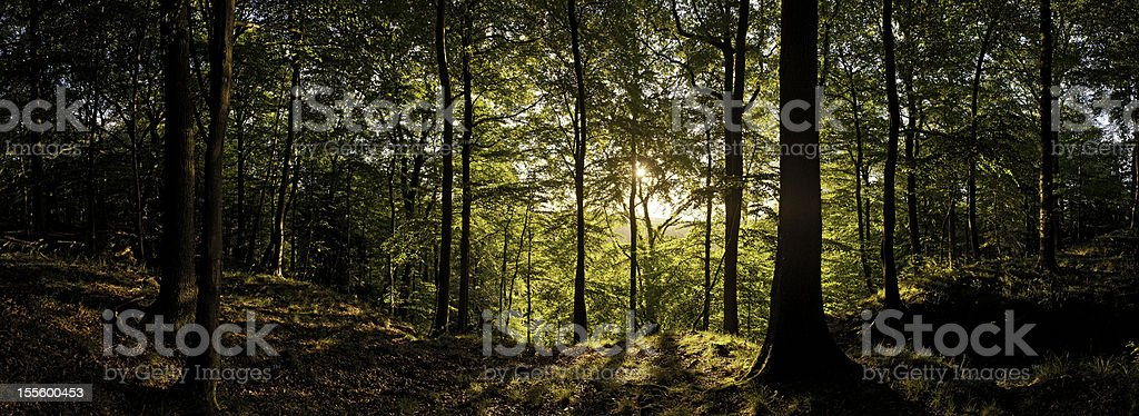 New day dawns in golden forest wilderness stock photo