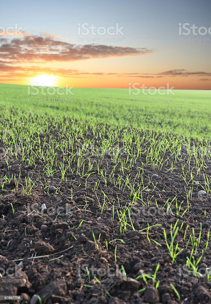 New Days fresh Growth royalty-free stock photo