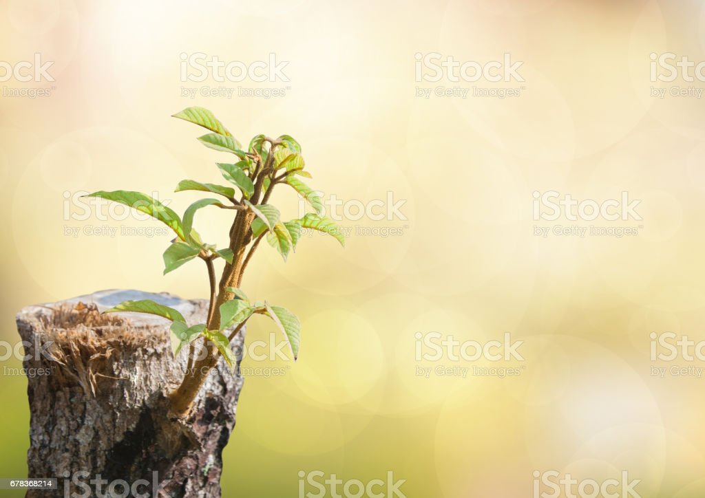 New development stock photo