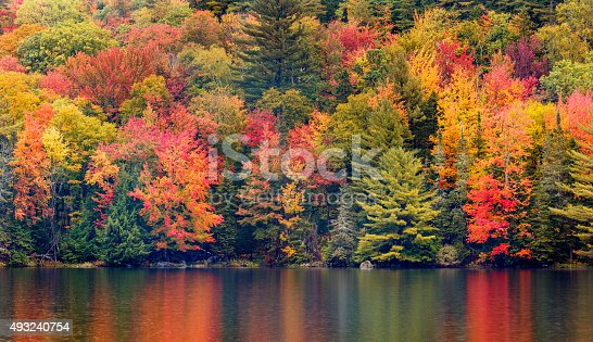 Autumn Foliage Reflecting in a New England Pond