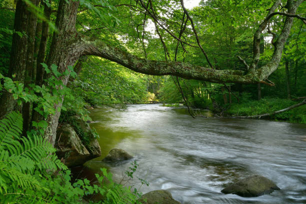 new england riverscape, summer - forest bathing foto e immagini stock