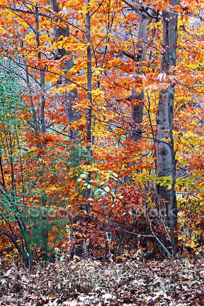 New England's fall stock photo