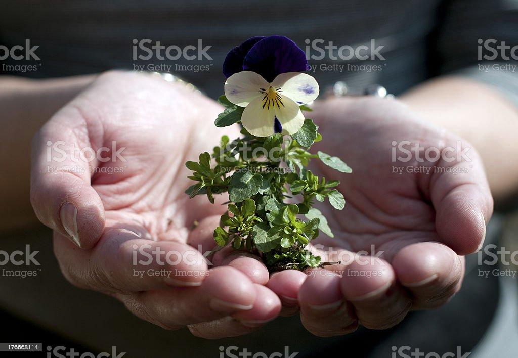 Nuevo flor en mano foto de stock libre de derechos
