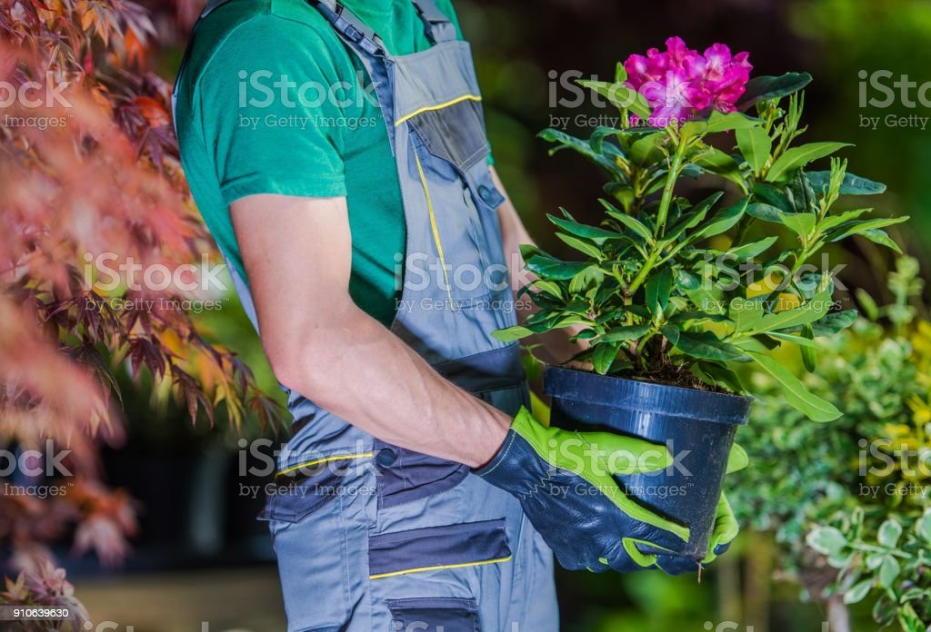 New Flowers Planting stock photo