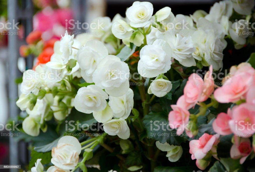 Nieuw seizoen van de bloemen op de markt van de landbouwer Redmond foto