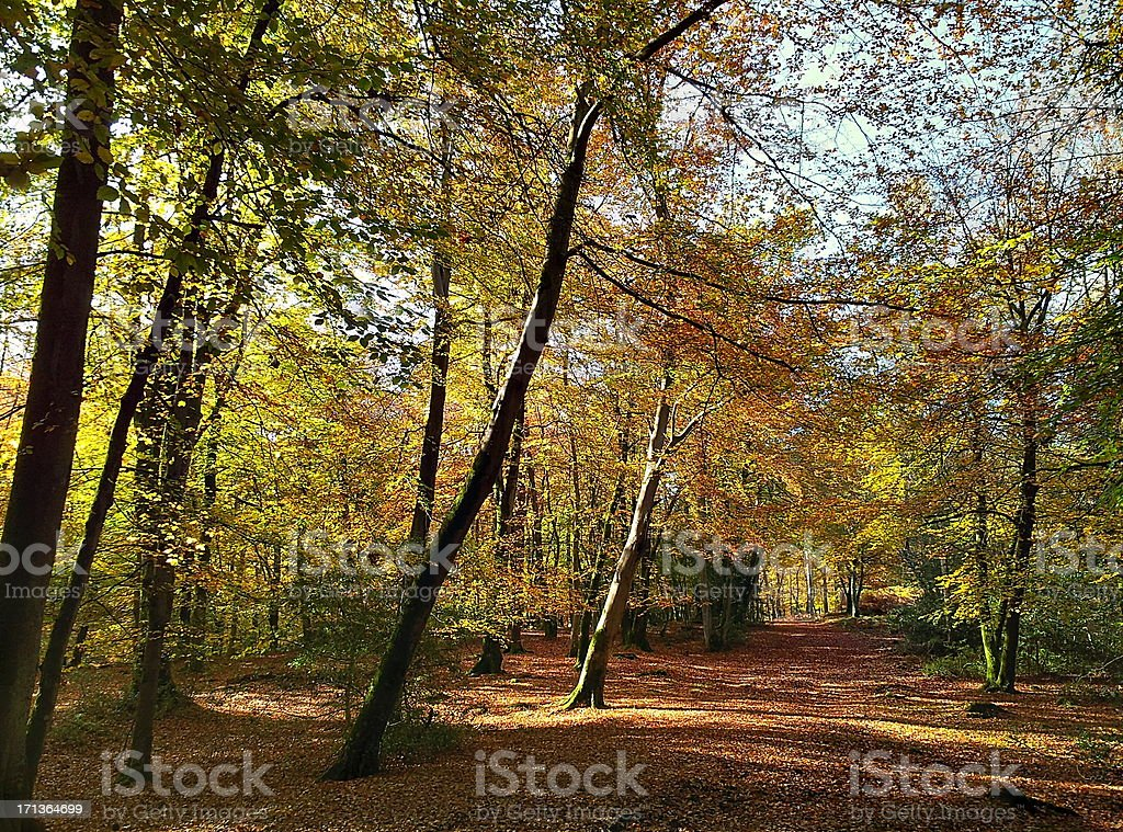New Forest in Autumn stock photo