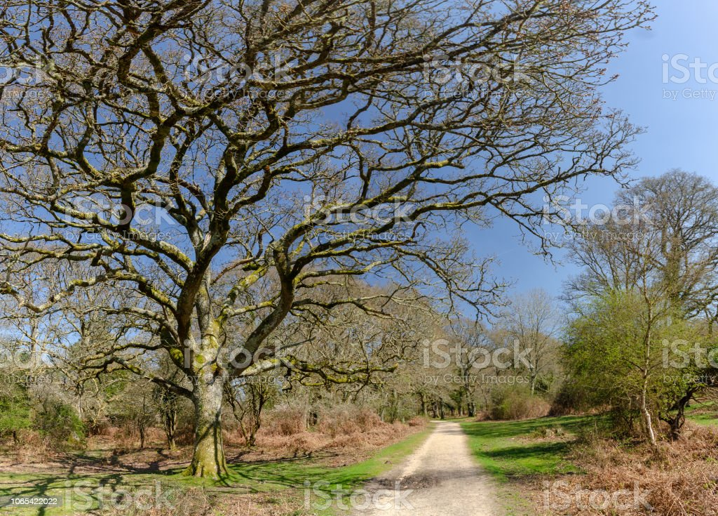 New Forest Landscapes stock photo